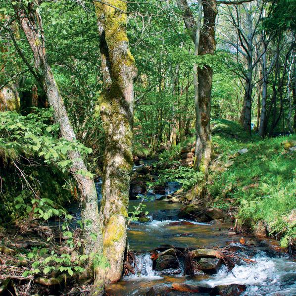 Cascade de Cubserviès, dans le Haut-Cabardès en Montagne Noire