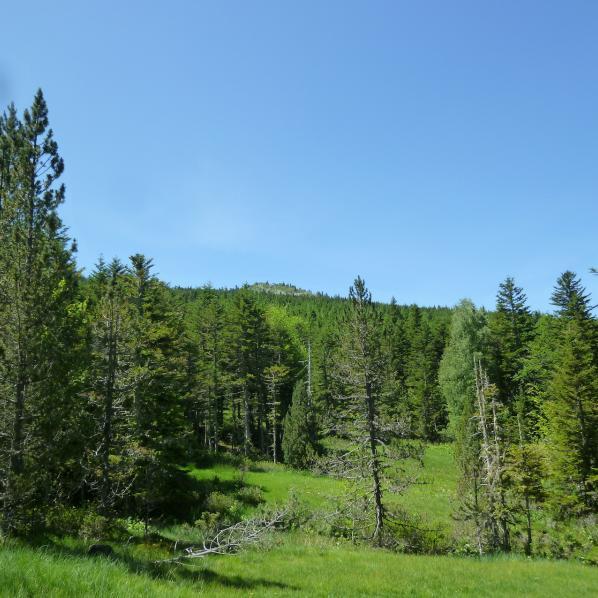 Les bois de chêne verts de l'espace naturel sensible de Bac du Pegullier